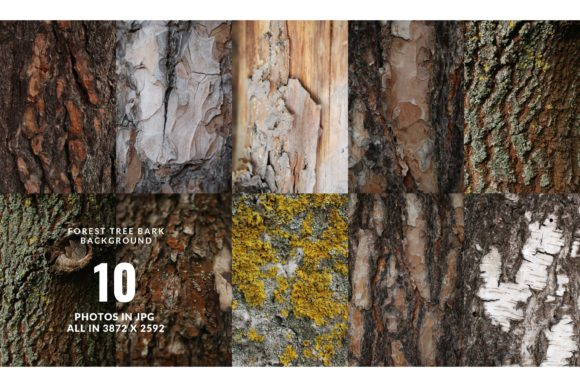 Forest Backdrops - Tree Bark Background Graphic Nature By Halyna Kysil Designs