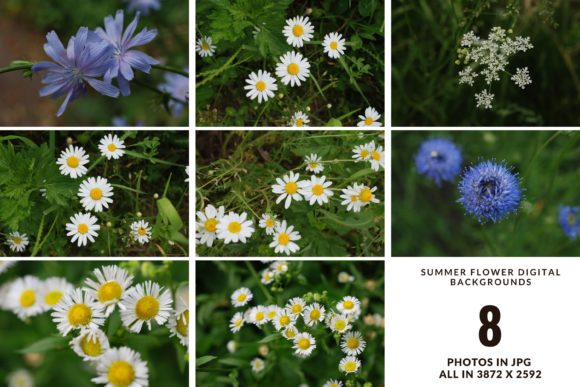 Summer Wildflower Digital Photo Set Graphic Nature By Halyna Kysil Designs