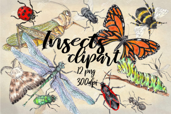 Watercolor Collection of Insects Graphic Illustrations By arevkasunshine