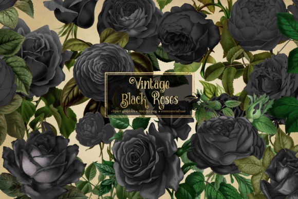 Print on Demand: Vintage Black Roses Clipart Graphic Illustrations By Digital Curio