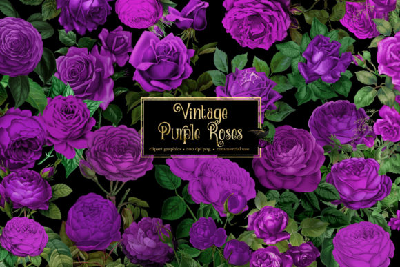 Print on Demand: Vintage Purple Roses Clipart Graphic Illustrations By Digital Curio
