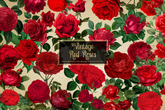Print on Demand: Vintage Red Roses Clipart Graphic Illustrations By Digital Curio