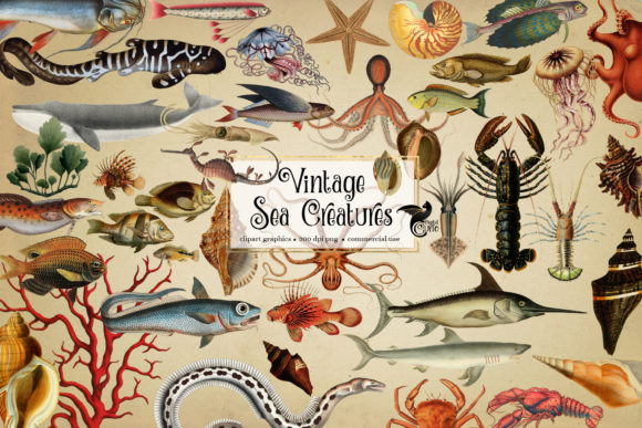 Print on Demand: Vintage Sea Creatures Clipart Graphic Illustrations By Digital Curio