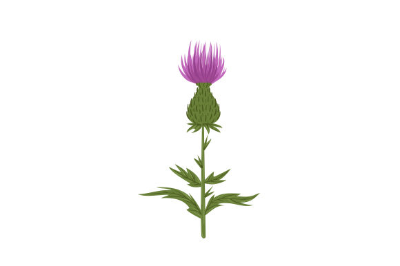 Thistle Nature & Outdoors Craft Cut File By Creative Fabrica Crafts