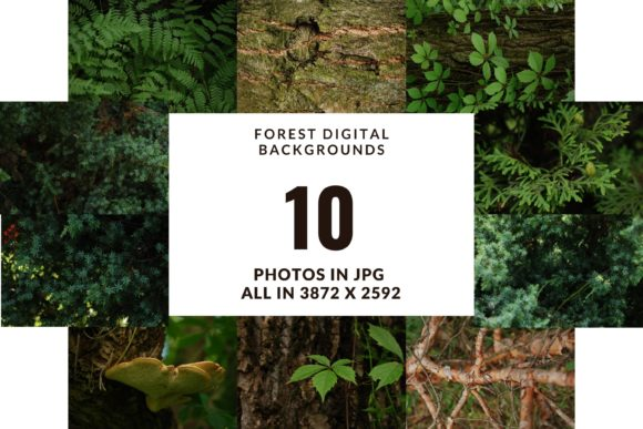Forest Digital Photo Backgrounds Graphic Nature By Halyna Kysil Designs
