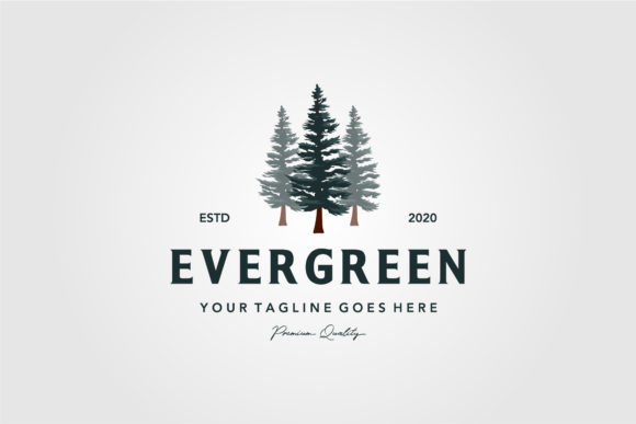 Pine Tree Vintage Logo Evergreen Spruce Graphic Logos By lawoel