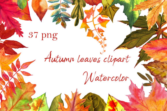 Autumn Leaves Clipart Set Graphic Illustrations By ElenaZlataArt