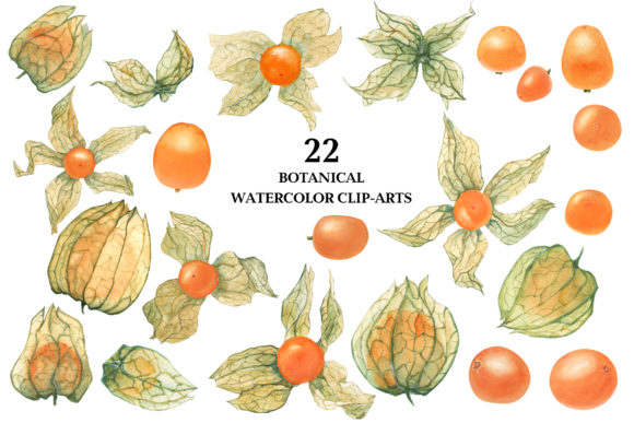 Print on Demand: Physalis. Botanical Watercolor Graphic Illustrations By Snowstorm's Box