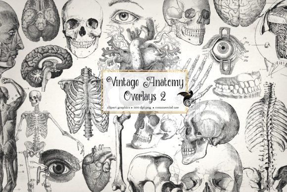 Print on Demand: Antique Anatomy Overlays Set 2 Gráfico Illustrations Por Digital Curio