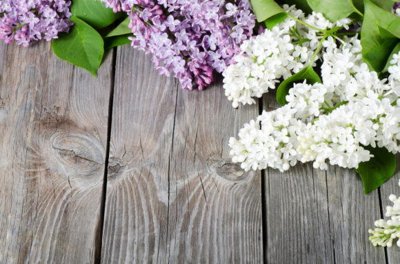 Blossom Branches, Lilac Flower Backdrop Graphic Nature By impresstore