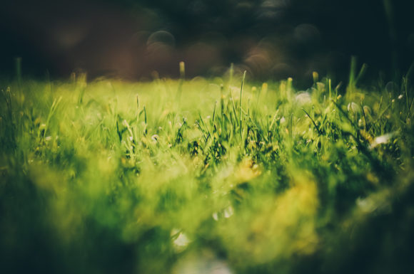 Print on Demand: Grass Macro Photography Graphic Nature By Кирилл Белый