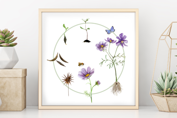 Flower Life Cycle Clip Art and Print Graphic Illustrations By tatibordiu
