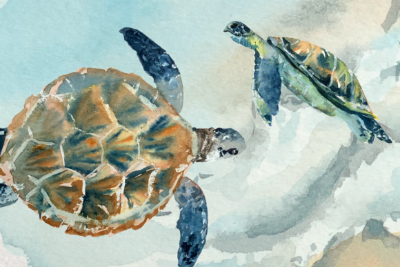 Watercolor Sea Turtle Life Cycle Clip Ar Graphic Illustrations By tatibordiu