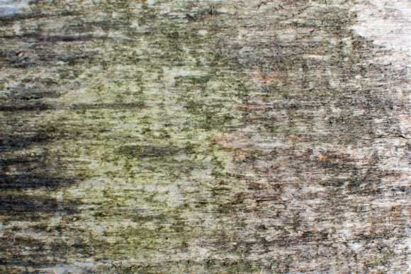 Print on Demand: Detail of Green Wooden Wall - Texture. Graphic Nature By OK-Design