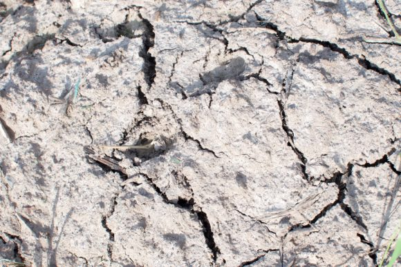 Print on Demand: Dry Soil. Cracked Ground Texture. Graphic Nature By OK-Design