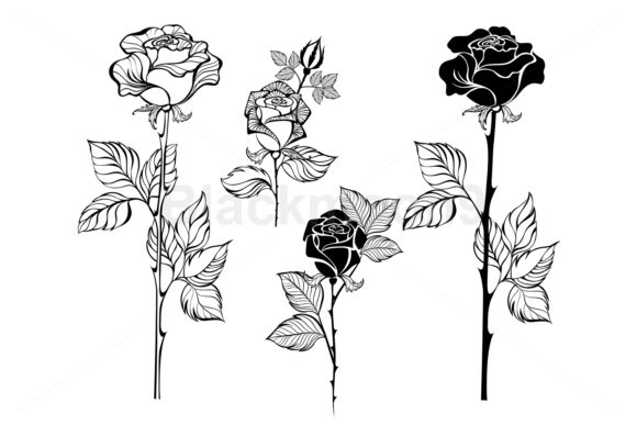 Set of Contour Roses Graphic Illustrations By Blackmoon9