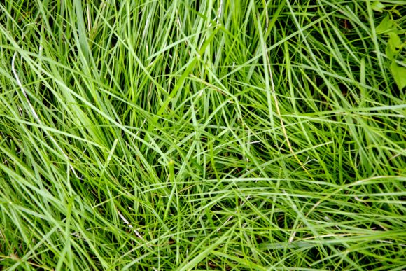 Print on Demand: Green Grass Texture for Background. Graphic Nature By OK-Design