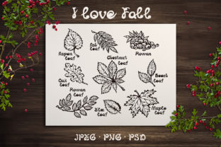 9 Hand-sketched Fall Leaves Graphic Illustrations By AV Design