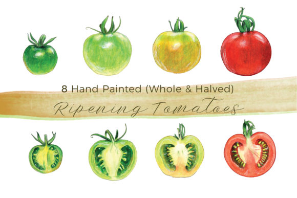 Whole & Halved Ripening Tomatoes Graphic Illustrations By Miriam Figueras Illustration