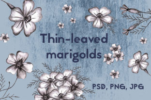 Hand-drawn Marigolds Graphic Collection. Graphic Illustrations By Irisidia