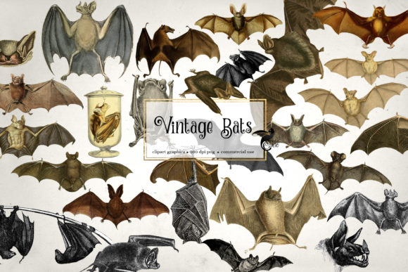 Print on Demand: Vintage Bats Clipart Graphic Illustrations By Digital Curio