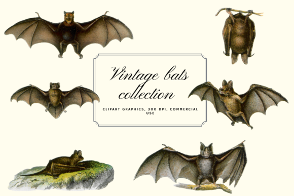Vintage Bats Collection, Creepy Graphics Graphic Objects By Aneta Design