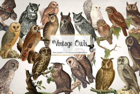 Print on Demand: Vintage Owls Clipart Graphic Illustrations By Digital Curio