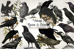 Print on Demand: Vintage Ravens and Crows Clipart Graphic Illustrations By Digital Curio