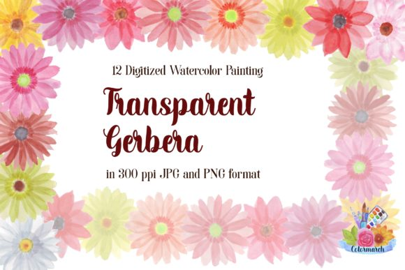 Transparent Gerbera Watercolor Clipart Graphic Illustrations By Colormarch