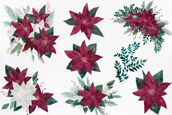 Burgundy Poinsettias Graphic Download