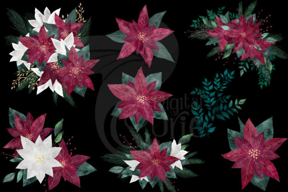 Burgundy Poinsettias Graphic Item