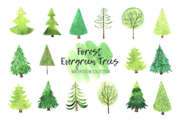 Watercolor Evergreen Trees Set Graphic Illustrations By Larysa Zabrotskaya