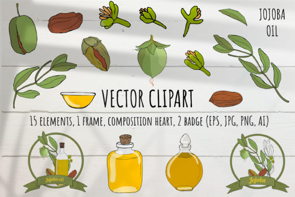 Vector Color Set of Jojoba Elements Graphic Illustrations By Komanna_Art
