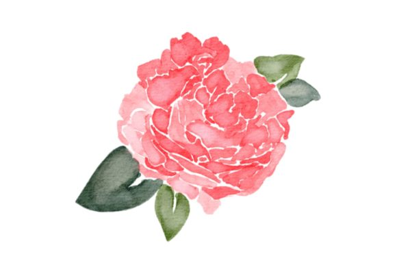 Print on Demand: Flower Peonies Watercolor PNG Graphic Illustrations By goodigital