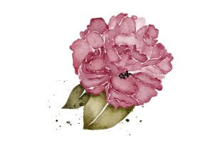 Print on Demand: Peonies Flower Realistic PNG Clip Art Graphic Illustrations By goodigital