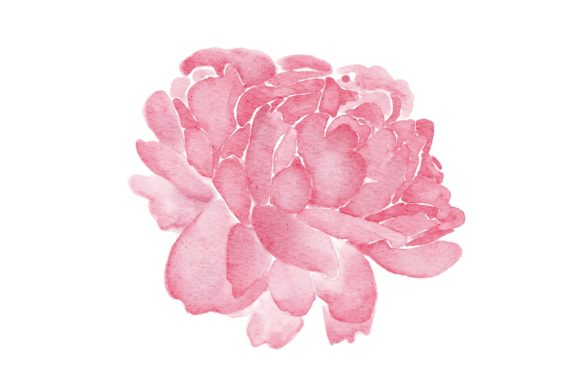 Print on Demand: Peonies Pinak Flower Watercolor PNG Graphic Illustrations By goodigital