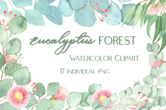 Watercolor Eucalyptus Foliage Clipart Graphic Illustrations By outlander1746