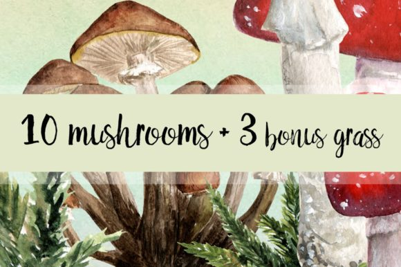 10 Watercolor Mushroom Set + 3 Bonus Graphic Illustrations By tatibordiu