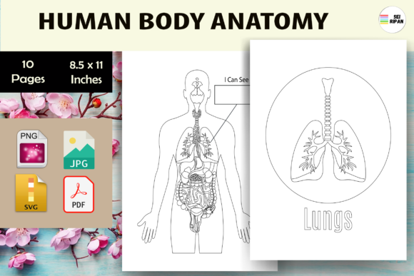 Print on Demand: Human Body Anatomy Activity Book-KDP Gráfico KDP Interiors Por Sei Ripan
