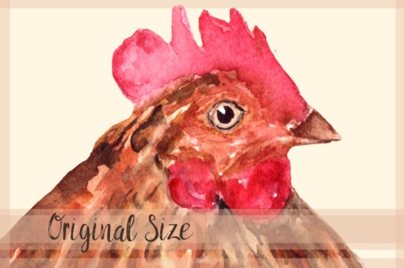 Rooster Family - Watercolor Clip Art Graphic Item