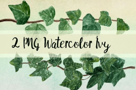 Watercolor Ivy Clip Art - 2 PNG Graphic Illustrations By tatibordiu