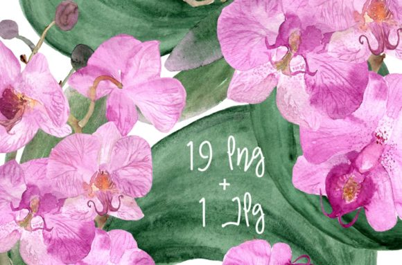 19 Watercolor Orchid Clip Art + Print Graphic Illustrations By tatibordiu