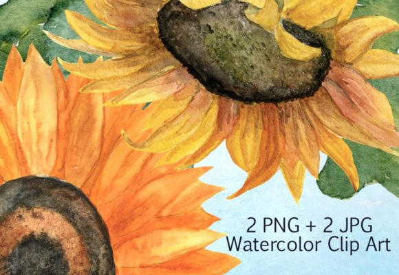 2 JPG + 2 PNG Sunflower Clip Art Graphic Illustrations By tatibordiu