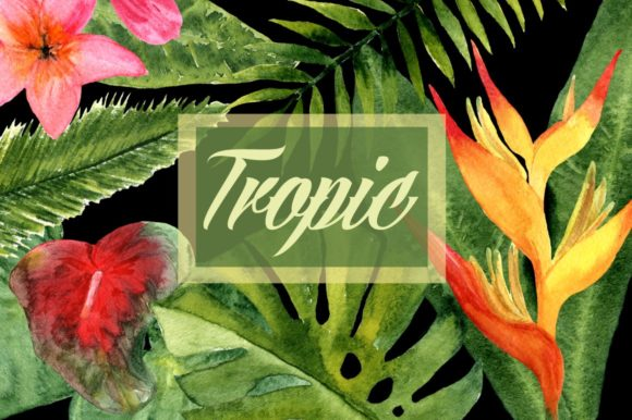 Watercolor Tropic Clip Art Graphic Illustrations By tatibordiu