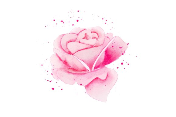 Print on Demand: Pink Rose Realistic Watercolor PNG Graphic Illustrations By goodigital