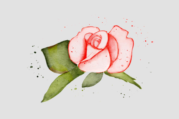 Print on Demand: Pink Rose Watercolor Realistic PNG Graphic Illustrations By goodigital