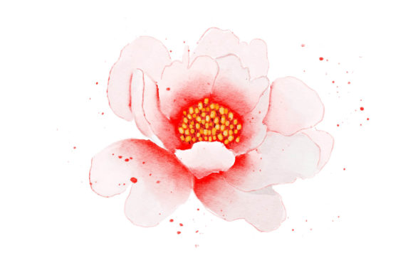 Print on Demand: Pink Flower Watercolor Realistic Graphic Illustrations By goodigital