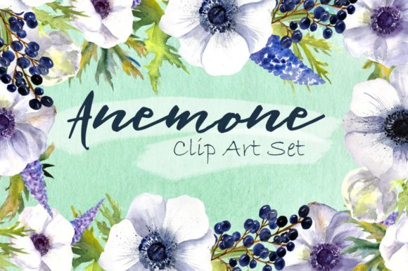 Watercolor Anemone Flowers Clipart Graphic Illustrations By tatibordiu