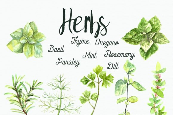 Watercolor Herbs Clip Art Set Graphic Illustrations By tatibordiu