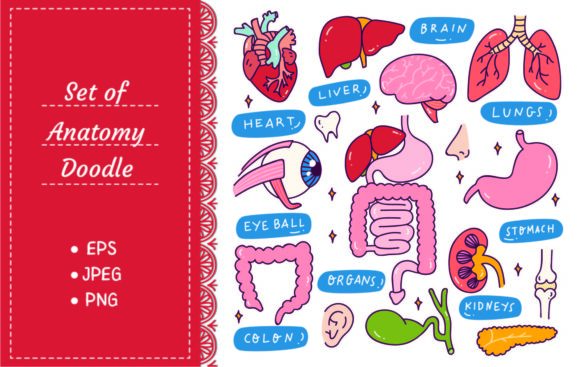 Human Internal Organs in Doodle Style Graphic Illustrations By Big Barn Doodles